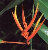 El piso de la selva está cubierto por abundante hojarasca y pequeños helechos, plántulas y arbustos; El estrato arbustivo es relativamente denso y las flores presentan vivos colores.