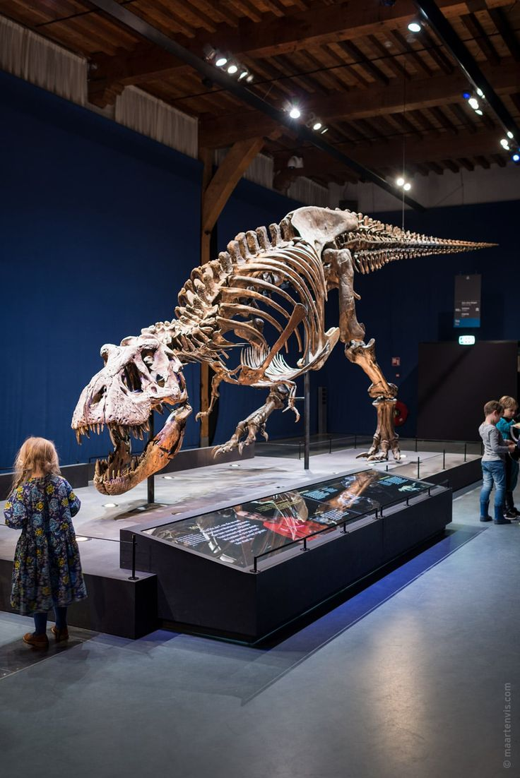 17 T-Rex Trix in Naturalis Museum in Leiden, the Netherlands