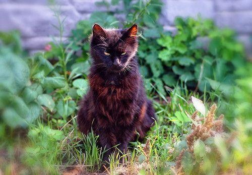 Черный котик на прогулке