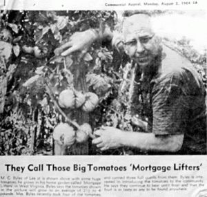 Radiator Charlie Mortgage Lifter Tomatoes