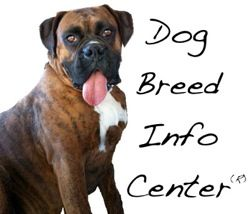 Dog Breed Info Center® is your one-stop shop for dog information. It is entertaining and informative all at the same time. The number one cause of death in dogs today is euthanasia. A dog's temperament is a direct result of its owner's ability to understand him and give him what he instinctually needs as a canine animal. There are no bad dogs...just uneducated owners.