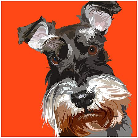 schnauzer poster pic...Ozzy is my boy too!