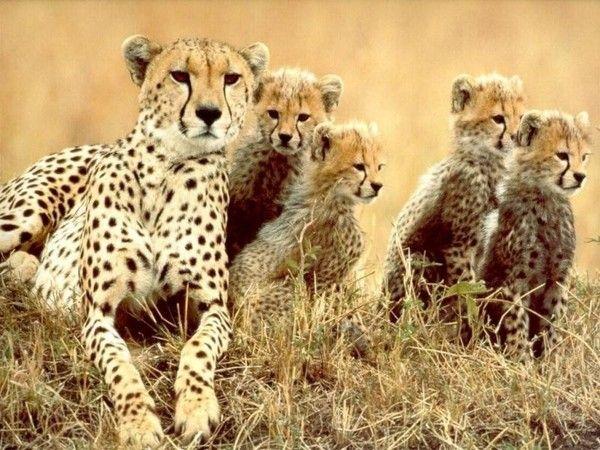 14 best ANIMAUX DE RÊVE images on Pinterest | Animals, Adorable ...