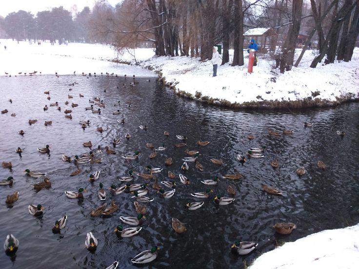 Парк Кузьминки, пруд