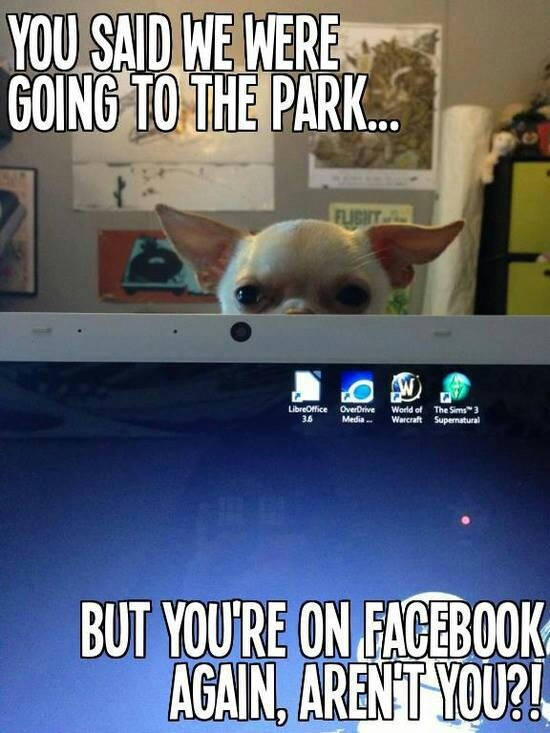 235 Best I Love Me Some Quot Gizmo Quot Images On Pinterest