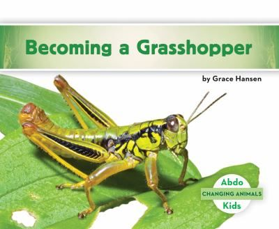 Introduction to the life cycle and characteristics of grasshoppers.