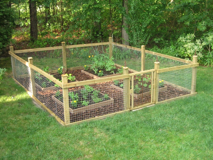 Our cute garden plants vegetables pinterest for Vegetable garden fence ideas