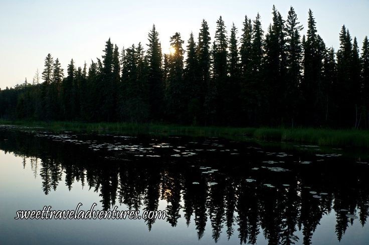 Trees and Lily Pads on the Hanging Heart Lakes in Prince Albert National Park, Saskatchewan, Canada