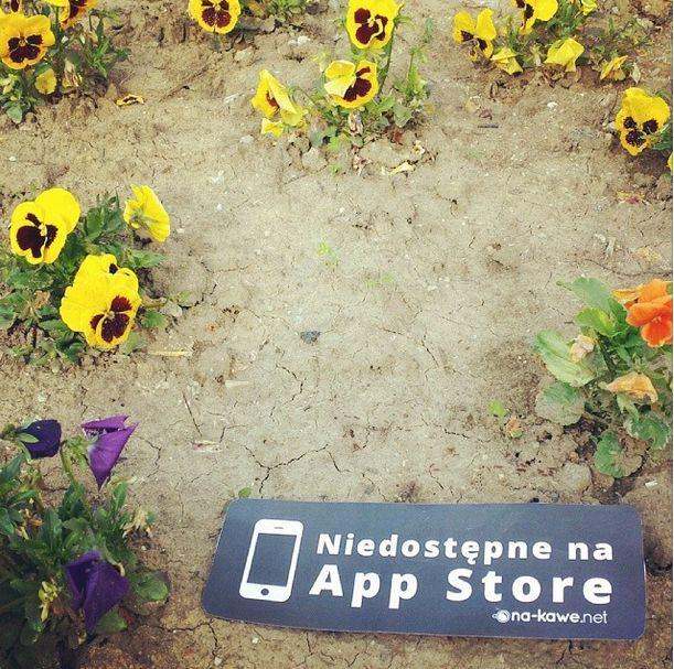 #notonappstore #nakawe #nakawenet #flowers #beautiful #newlife #instadaily #poland #kwiat #yellow #color #art #nature #real #cute  http://na-kawe.net