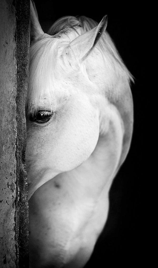 Cheval en noir et blanc