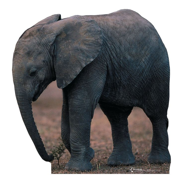 111 Best Jungle Safari Vbs Images On Pinterest