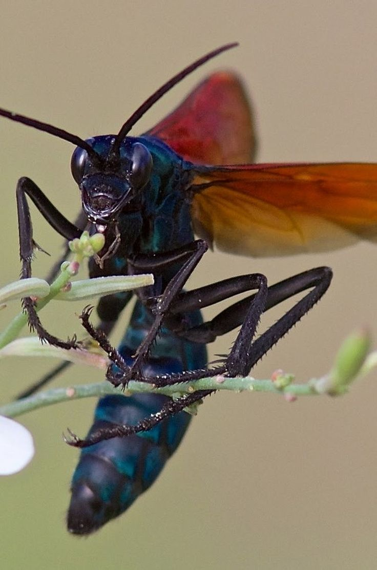 best 25 wasp insect ideas on pinterest wasp bee shop and bees
