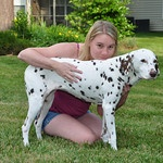 My birthday wish is to raise money for Willing Hearts Dalmatian Rescue Group. Follow the picture if you are interested in learning more or would like to donate!