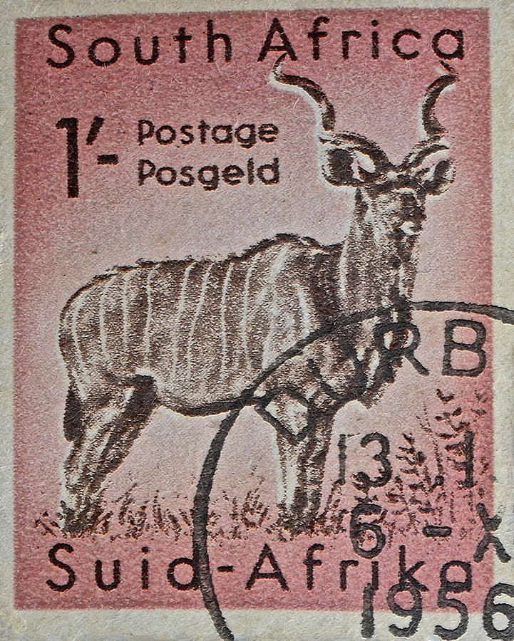 1956 South African Stamp - Durban Postmark Photograph