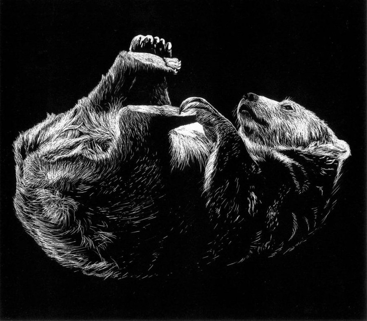 Scratchboard of a bear from college work, circa 2003