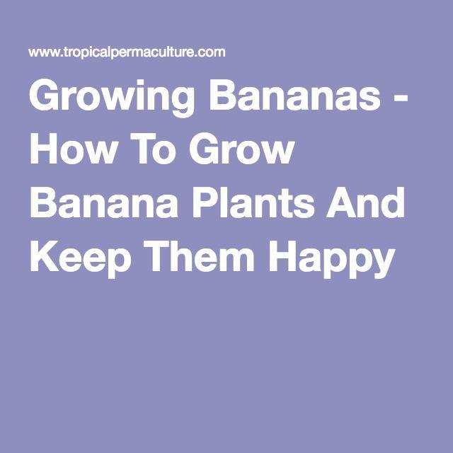 Growing Bananas - How To Grow Banana Plants And Keep Them Happy