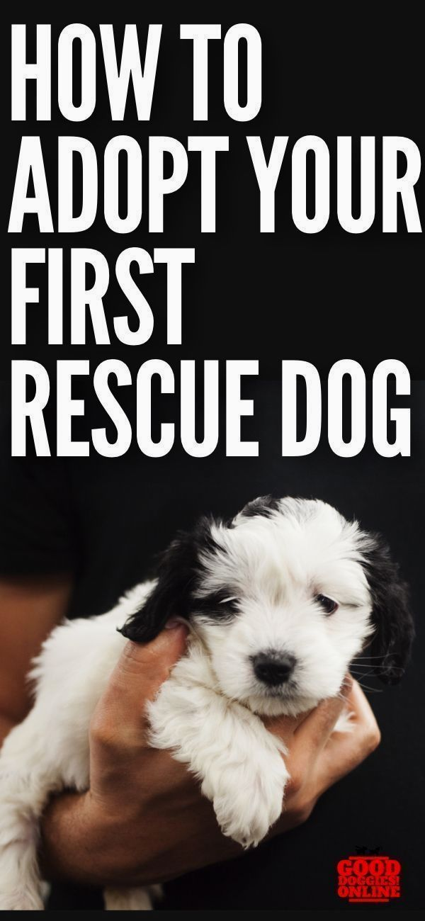 New Dog Training Ideas Click Pic For Lots Of Dog Care And