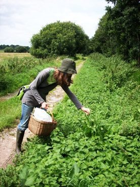 Foraging for Wild Food. Many wild plants are very rich in nutrients and phytochemicals needed by our bodies.   photo credit: Firefox Bushcraft
