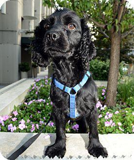 Dog Adoption Events In Nashville Tn