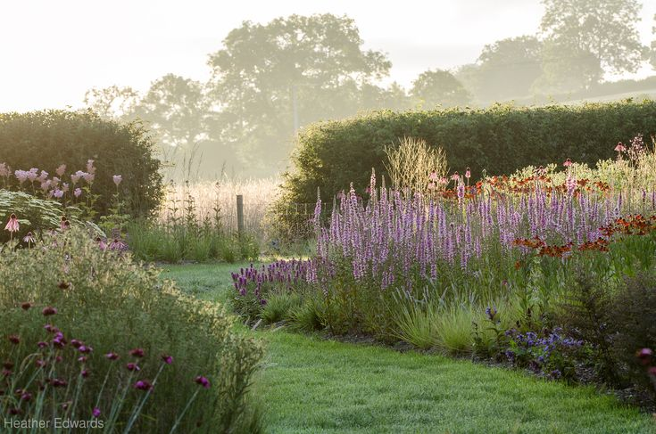 Early morning perennial border with Lythrum salicaria 'Blush' Location: Oudolf Field, Hauser & Wirth, Somerset
