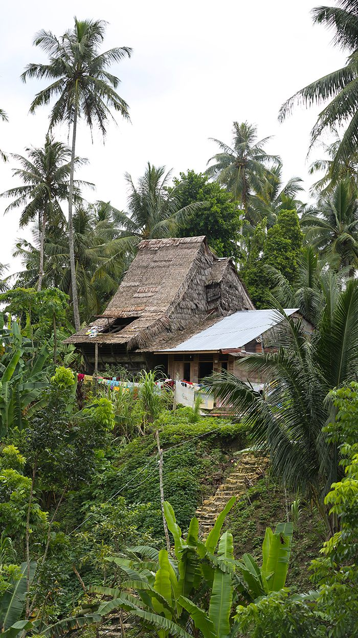 Traditional house in south Nias. Most of the houses in the south are built close together for defensive purposes. This is an unusual exception. Nias Island, North Sumatra #indonesia. Photo by Bjorn Svensson. www.visitniasisland.com