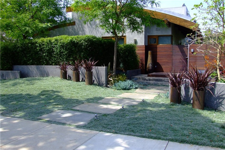 Dymondia Landscaping Pinterest Lawn And Php