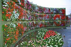 Giardinaggio.net: Giardino verticale fai da te