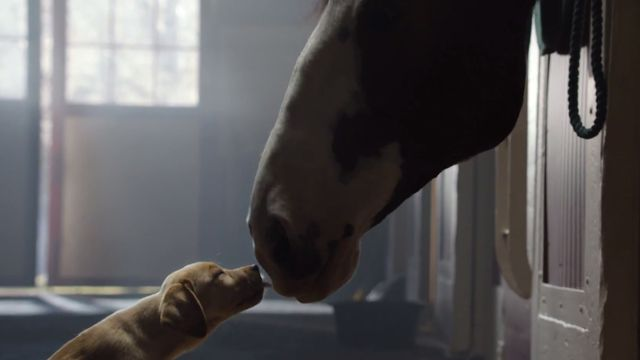 Budweiser Super Bowl Commercial – Puppy Love