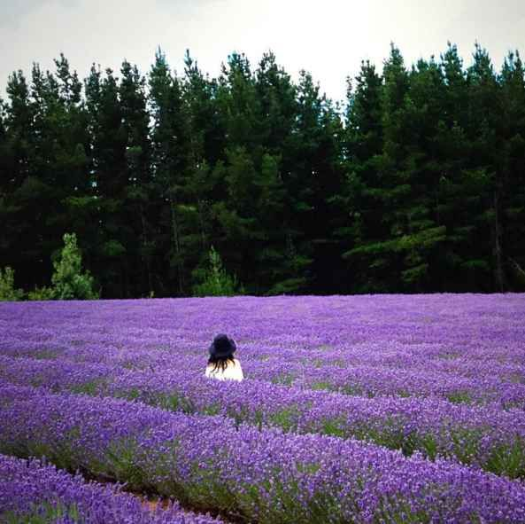 Visit lavender fields.