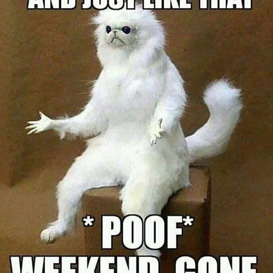 FFS, where did the weekend go?! #ffs #ffshaving #cat #meme ...