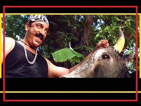 Jahil Kasai Angry Bull Qurbani eid ul azha 2016