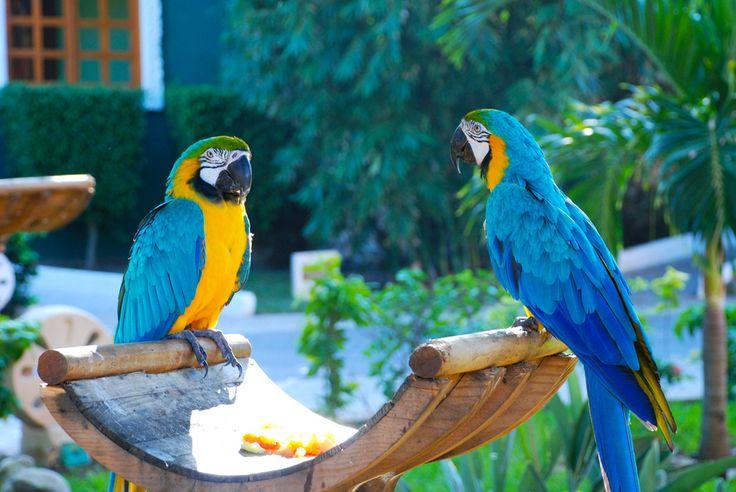 Färgglada fåglar är ingen ovanlighet i Playa del Carmen. Precis som det mesta här är varmt och färgglatt. Underbart. Foto: Diriye Amey (Flic...