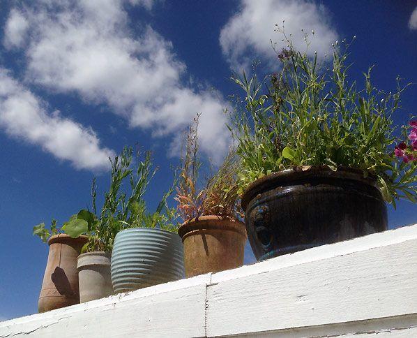 Sæt krukker med blomster på taget af din carport, garage eller på taget af dit haveskur, så er der plads til mange blomster til insekterne i din lille have