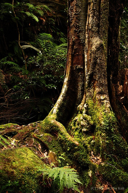 Rainforests at Grand Canyon, Blackhealth, Blue Mountains, NSW, Australia ~ By Rain.Forest