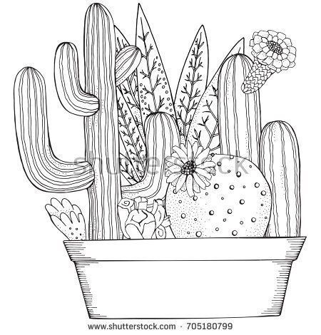 Hand Drawn Set Of Succulents Or Cacti In Pots Doodles Elements Black And White Coloring Book Page For Cactus Drawing Cactus Illustration Cute Coloring Pages
