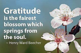 .: Thoughts, Gratitude Thanks, Posts, Spring Wonder, Living, Photo, Inspiration Quotes, Favorite Inspiration, Gratitude Blossoms