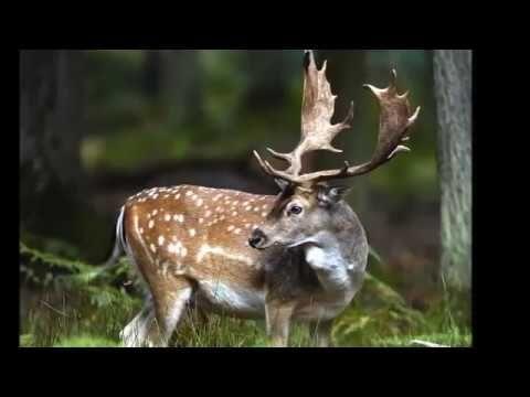 Park Krajobrazowy Wzniesień Łódzkich - YouTube