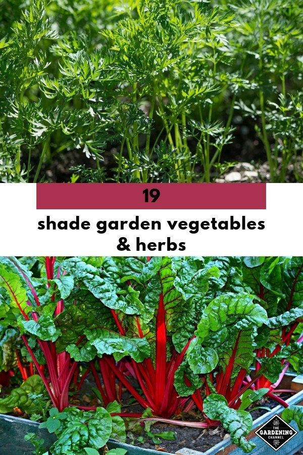 Shade Garden Vegetables And Herbs