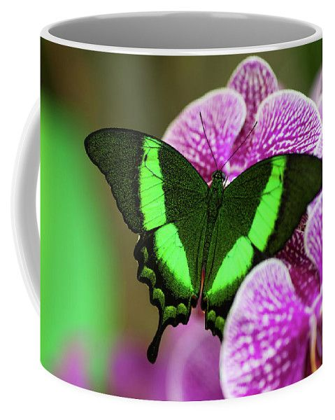 Emerald Swallowtail On Purple Orchid. Beauty In Frame 2 Coffee Mug by Jenny Rainbow.  Small (11 oz.)