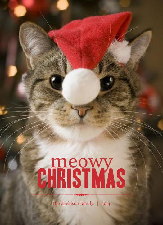 Holiday Card Sayings: Cat, Dog, Funny, Family, Religious Themes U0026 More