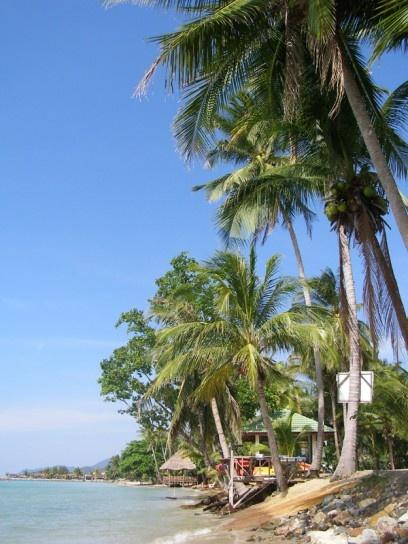 Palms on Kai Bae Beach, Koh Chang, Thailand