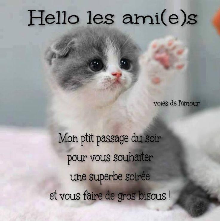 Hello les ami(e)s Mon ptit passage du soir pour vous souhaiter une superbe soirée et vous faire de gros bisous ! #bonnesoiree chat chaton mignon amitie