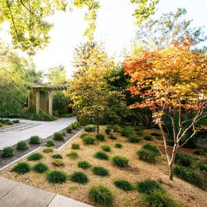 Top 10 trees for small spaces japanese maple gardens for Top 10 trees for small gardens