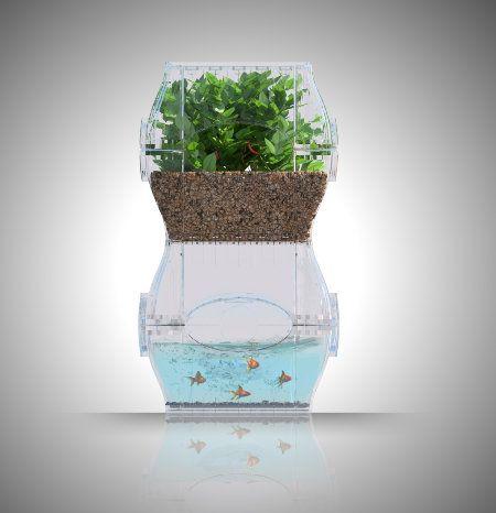 aquaponics: indoor garden for the tiniest, darkest apartments
