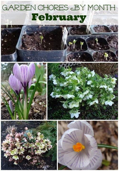 Ain't no rest for the green thumb! Check out these February garden chores by An Oregon Cottage and get your spring garden off to an early start.