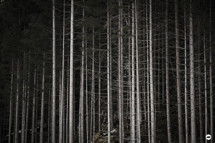 wood - Passeggiata a campotures, sentiero di San Francesco
