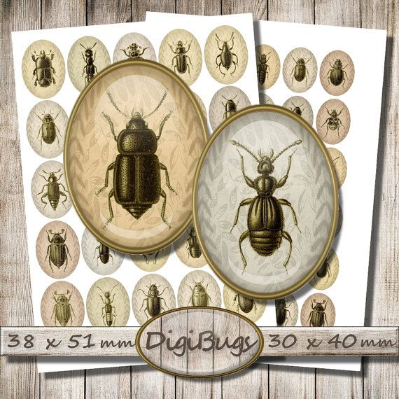 Digital Collage Sheet, Oval Beetle Images, 38 x 51 mm, 30 x 40 mm, Insect Jewelry Images, Cream & Coffee Background, Instant Download, c9