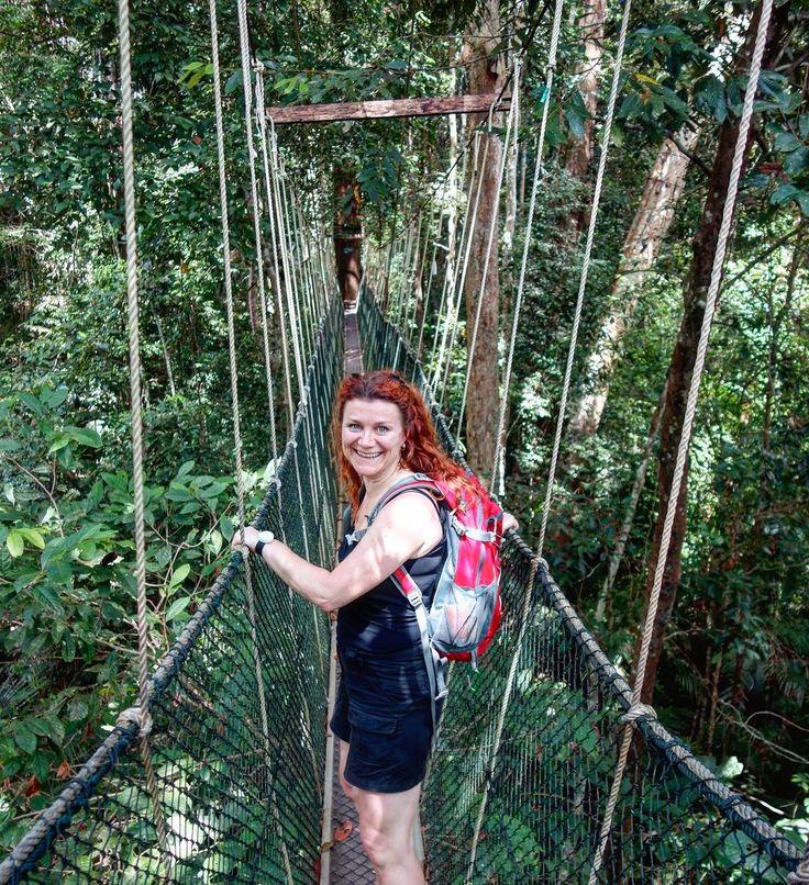 Canopy walk - 40 meter high - 500 meter long! Have you ever tried?  #canopywalk #tamannegara #malaysia #rainforest #danishadventurer