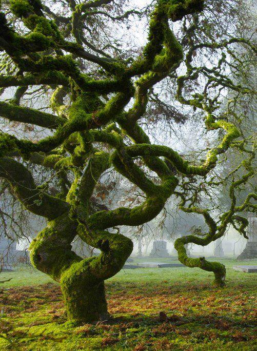 Nice green tree