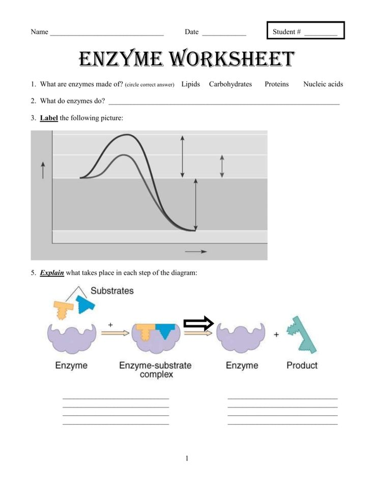 Enzyme Worksheet Answers